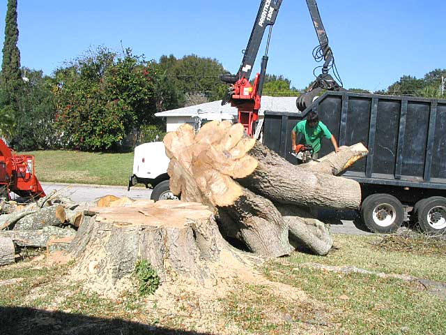 Five Things to Check before Hiring Tree Removal Services! | Enterprise  Business Experts